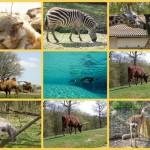Safari ardéchois