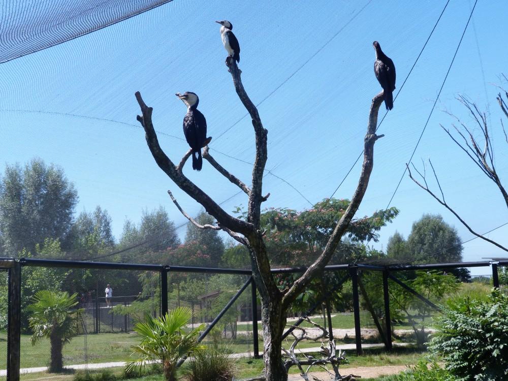 parc aux oiseaux 027