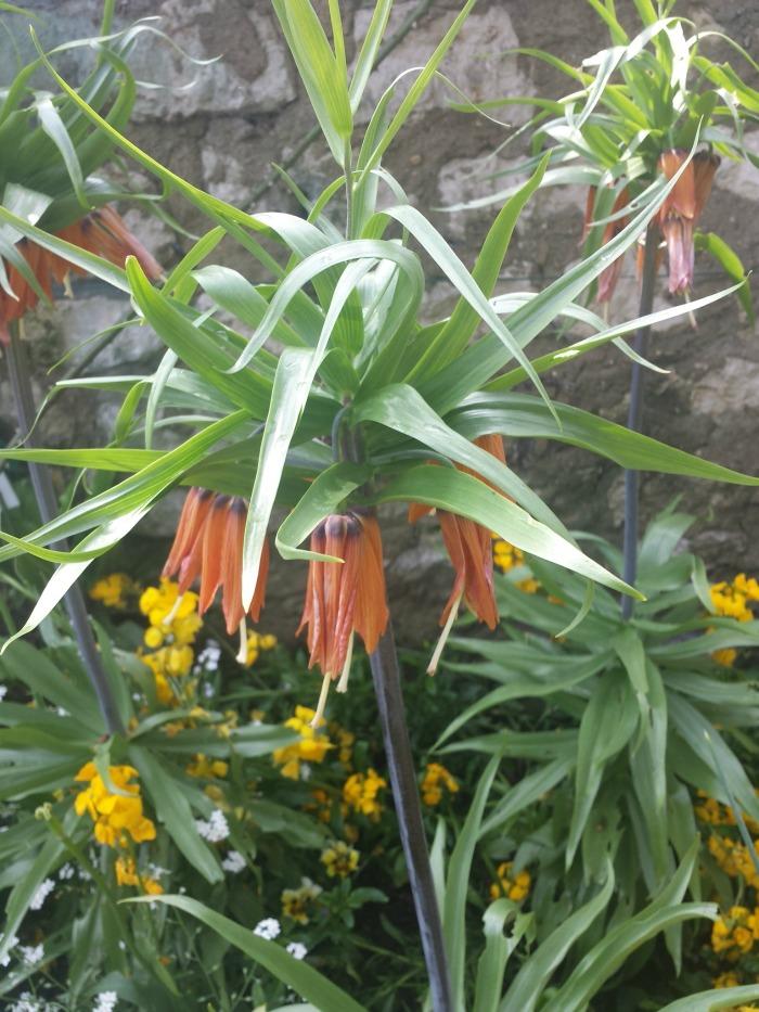 jardin monet fleur 2