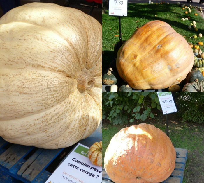 courge poids