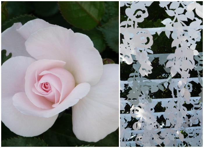 collage rose 3