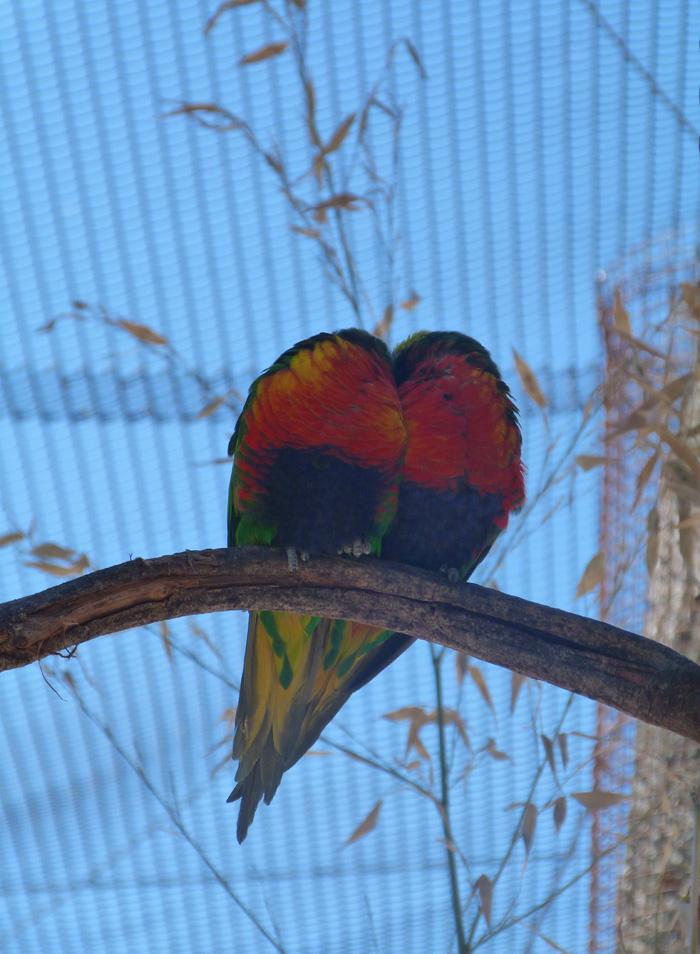 parc des oiseaux 13