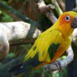 10 choses à faire au Parc des Oiseaux