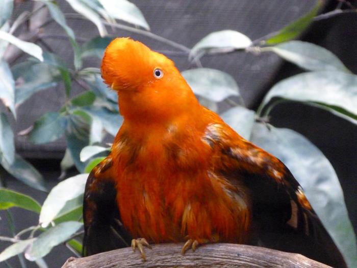 parc des oiseaux 26