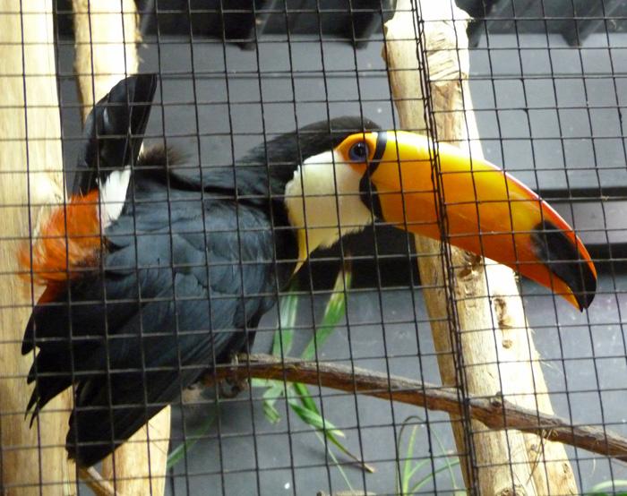 parc des oiseaux 29