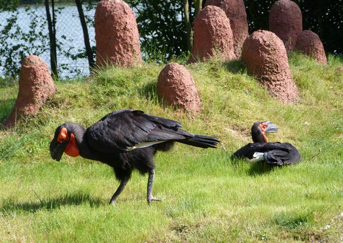 parc des oiseaux 45