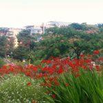 Le parc de la tête d'or en été sur Instagram