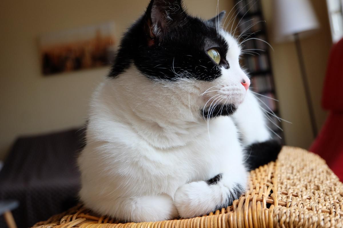 Chat Ma Vie Avant Apres Avoir Adopte Un Jeune Chat